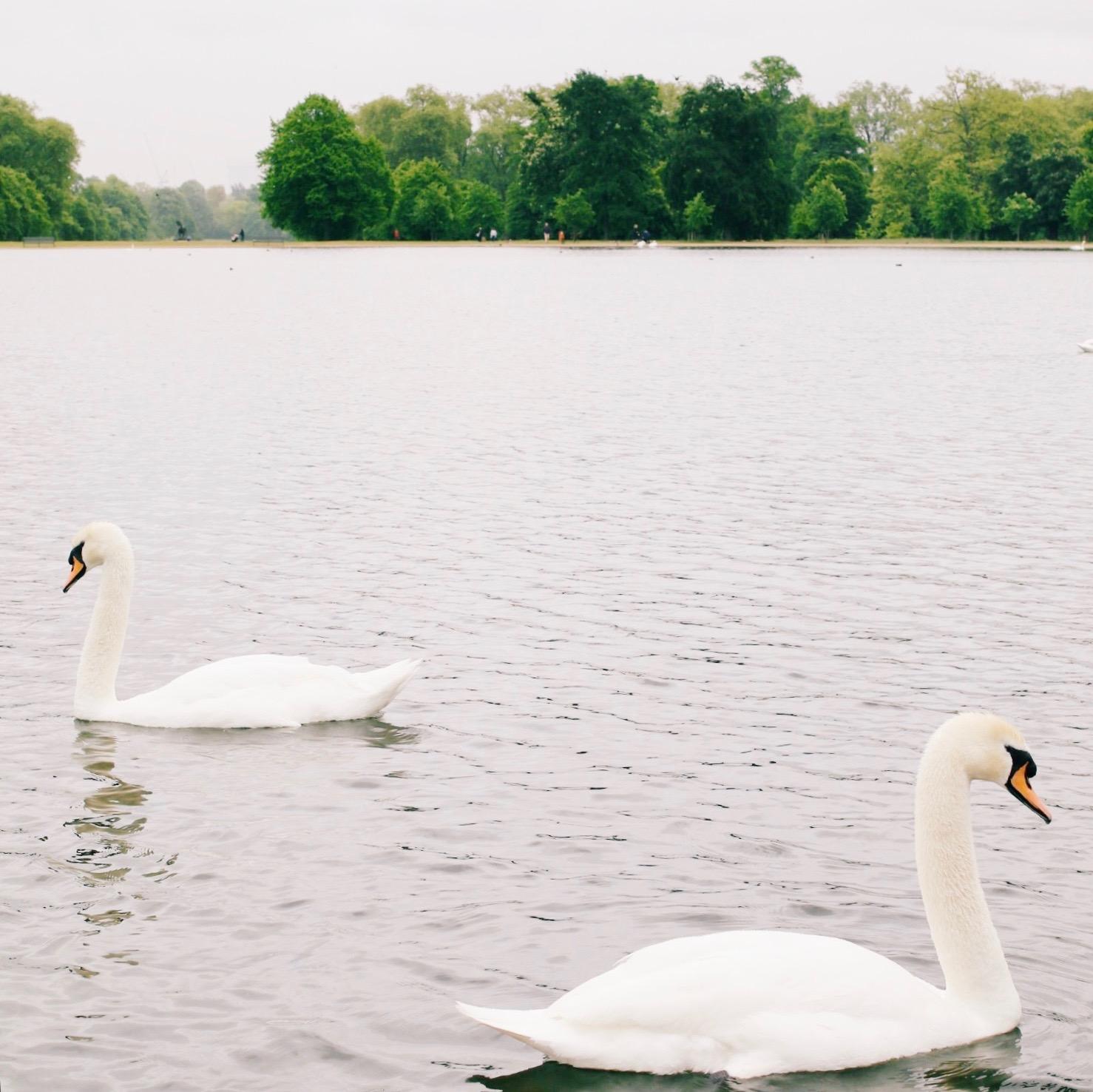London // Willivia